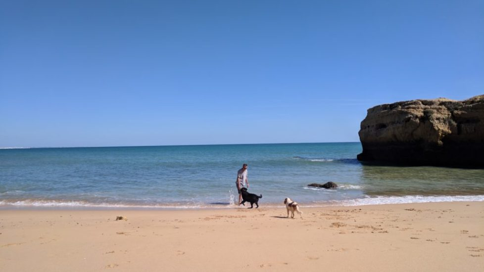 Happy dogs on a rare sunny day in Portugal, March, 2018