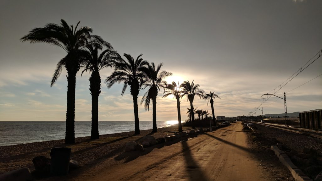 Late evening light plays on a row of palm trees in Malgrat de Mar