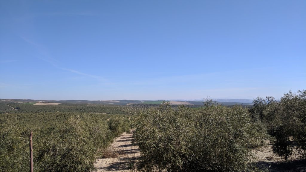 Our view of the olive groves
