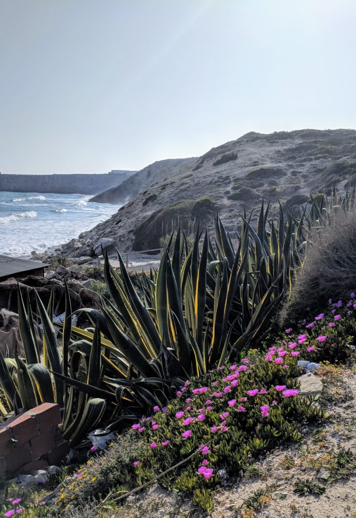 Flora of the Cape at Sagres