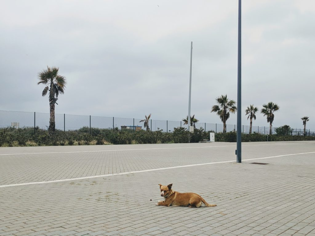 The little stray dog at the Marina